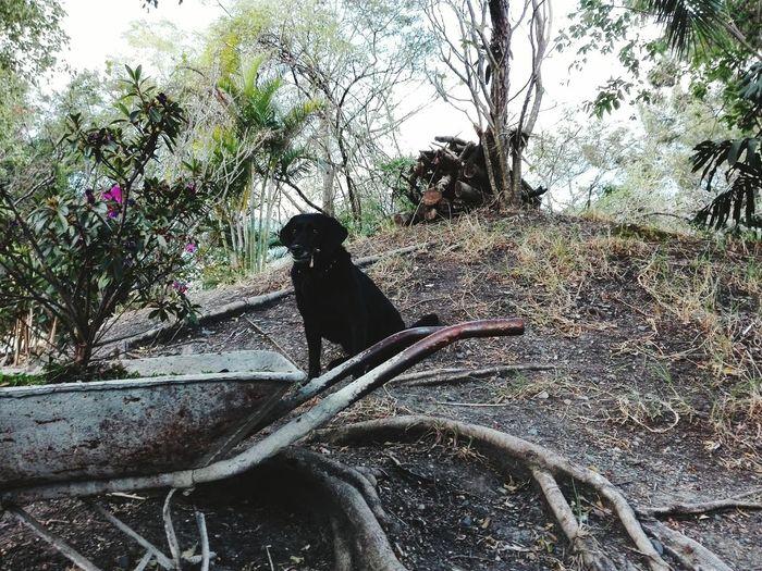 Dog waiting to