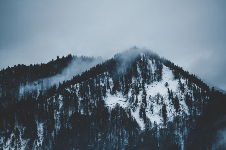 Foggy winter scenery Tranquil Scene Tranquility Beauty In Nature Scenics - Nature Sky No People Fog Nature Environment Outdoors Scenery Winter Wonderland Winter Snow Snowy Cloudy Low Clouds Silhouette Woods Cloud - Sky Cloudy Sky Foggy Nature Mood Backgrounds
