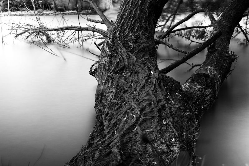 Tree Plant Water Branch Nature No People Day Beauty In Nature Growth Outdoors Tranquility Trunk Tree Trunk Lake Bare Tree Scenics - Nature Winter Cold Temperature