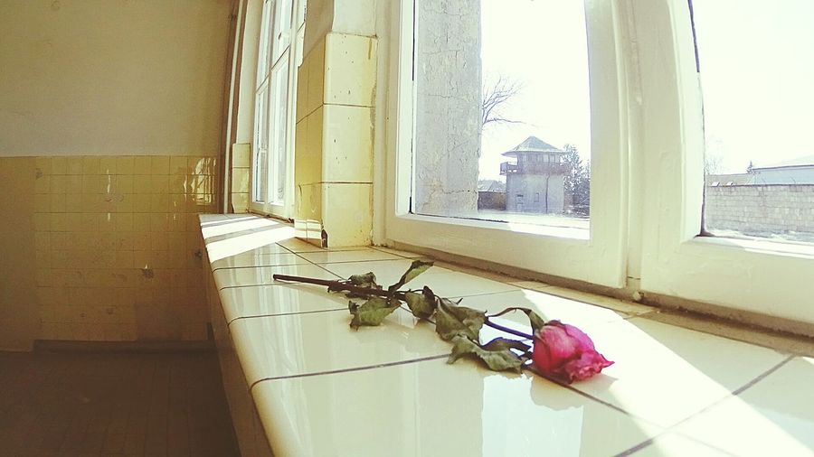 All the stories of the war just became real when i finally saw the terrible places... Dying Rose Past