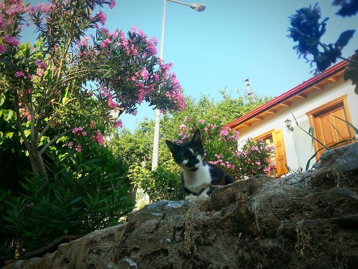 Cat Holiday Travel Photography Turkey Animal Photography Izmir şirinceturkey Sirince