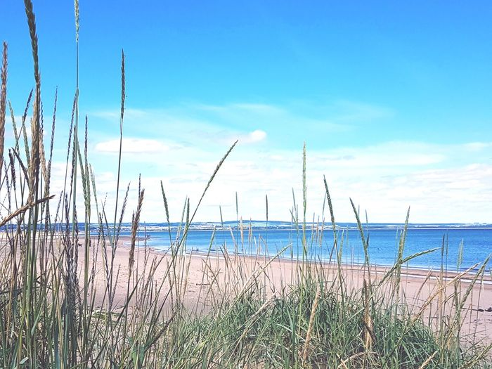 beach Beachlife Nature Cloud - Sky Sky Water Sea No People Outdoors Day Business Finance And Industry Grass Tranquility Growth Beach Landscape