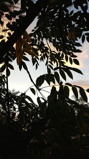 Botanical Garden Oslo Norway Opening Tree Leaf Silhouette Sky Close-up Landscape Tranquility Growing Calm Sunset Idyllic Branch Beauty In Nature Tranquil Scene Non-urban Scene Sun