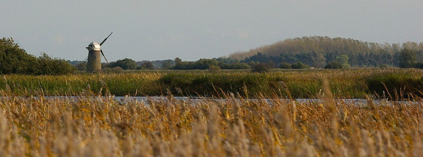 Norfolk windmill. Grass Field Alternative Energy Landscape Rural Scene Windmill Wind Power Tranquil Scene Landscape_photography Norfolk Uk Reeds