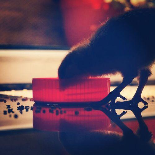جوجه :) . . کوچیک اب قرمز سیاه قهوه_ای ایوون ناز پا سر بدن دونه عکاس خودمم چقد من هنرمندم ^__^