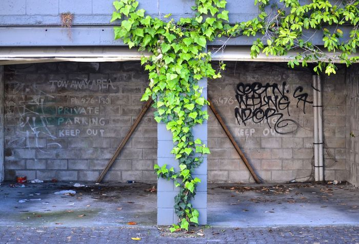 Hamilton Urban Graffiti New Zealand Ivy Contrast Decay Beauty Of Decay Garage