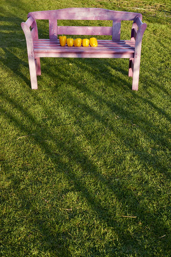 Absence Bench Day Empty Field Grass Green Color High Angle View Land Lawn Nature No People Outdoors Park Park - Man Made Space Park Bench Plant Relaxation Seat Tranquility