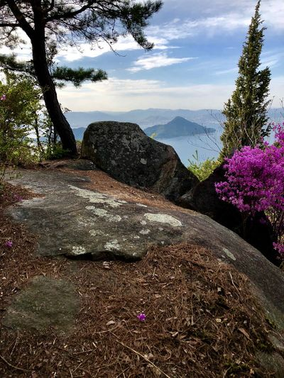 A Huge Rock Commanding a Grand View of Part of Seto Inland Sea. (180413-180516) Plant Nature Tree Sky Beauty In Nature Growth No People Flowering Plant Flower Pink Color Scenics - Nature Cloud - Sky Mountain Land Water Day Sunlight Tranquility Tranquil Scene Outdoors