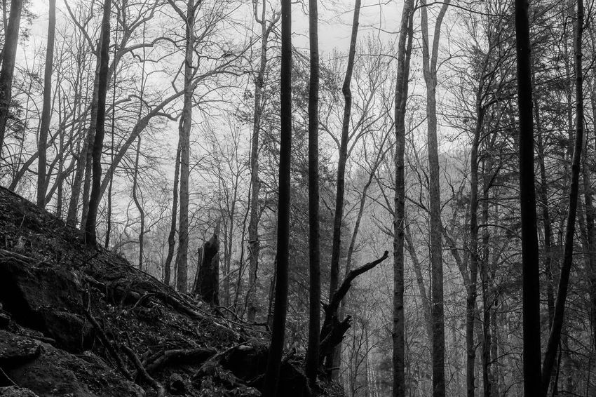 Cumberland Falls, KY Monochrome Black And White Tree Nature Low Angle View No People Day Tree Trunk Branch Outdoors Beauty In Nature Sky