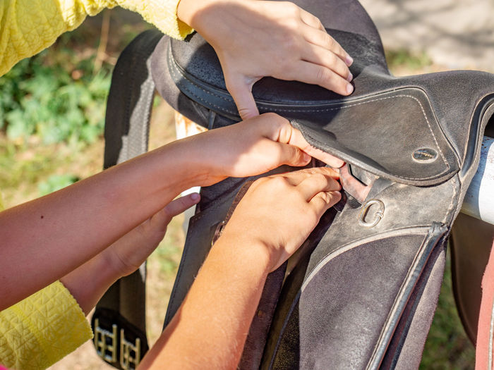 Rider is saddling a horse and tighten the girth. riding school use classic english saddle