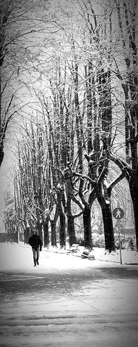 Tree Trees Tree_collection  Treelovers Treescape Outdoors Nature Cold Temperature Snow Snowcapped Snowy Snowy Trees Snowy Road Snowy Day Snowy Street Snowy Branches Lone Lonely Lonely Person Walking Walking In The Snow... Walking Alone Black And White Bw_collection Bw Photography