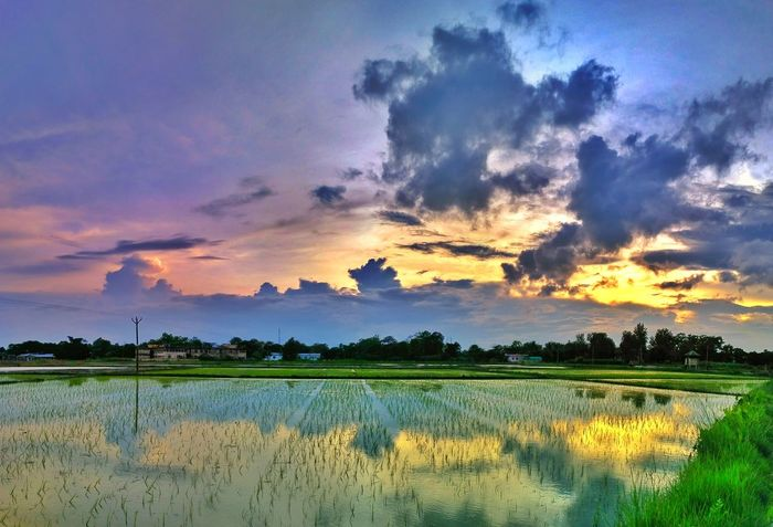How colourful a sunset can be? See it yourself. 5 vertical shots taken with xiaomi redmi 3S smartphone and then stitched and retouched. Agriculture Landscape Freshness Scenics Nature Cloud - Sky Beauty In Nature Rice Paddy Eye Em Nature Lover EyeEm Best Shots Nature Photography Mobile Photography Serenity Water Reflections EyeEmBestPics EyeEmMarket. Sky And Clouds Marketplace Dramatic Sky EyeEmNewHere Sunset EyeEm Selects Outdoors Rural Scene Nature