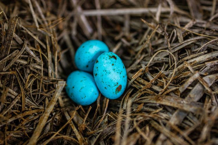 easter eggs in