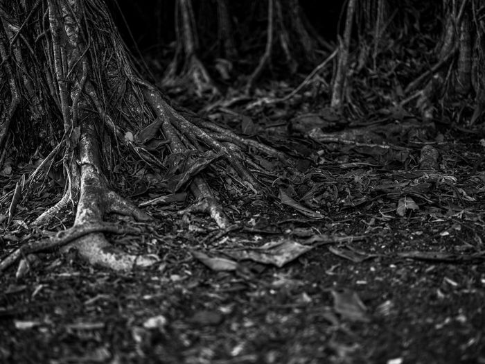 Earthbound Earth Growth Low Angle View Nature Tree Trunk Beauty In Nature Black And White Digital Art Light And Shadow Oil Painting Outdoors Photo Editing Photographyisthemuse Texture Tree Roots
