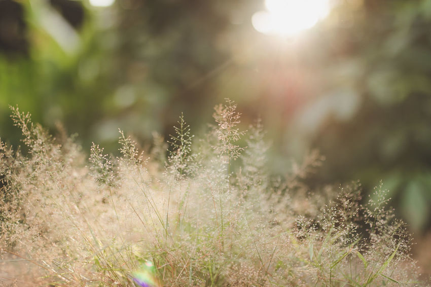 Beauty In Nature Close-up Day Freshness Goldlight Grass Growth Nature No People Outdoors Plant Sunlight Sunset Tranquility Tree