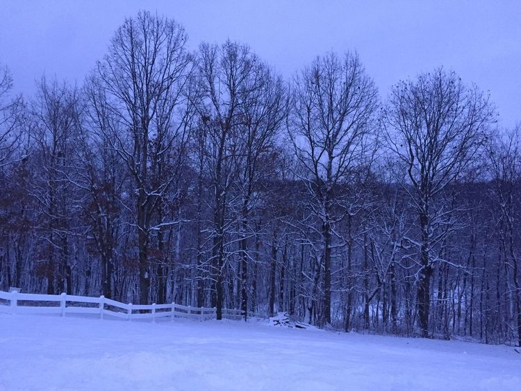 Snow Winter Cold Temperature Bare Tree Nature Tree Beauty In Nature No People Outdoors Tranquility Landscape Sky