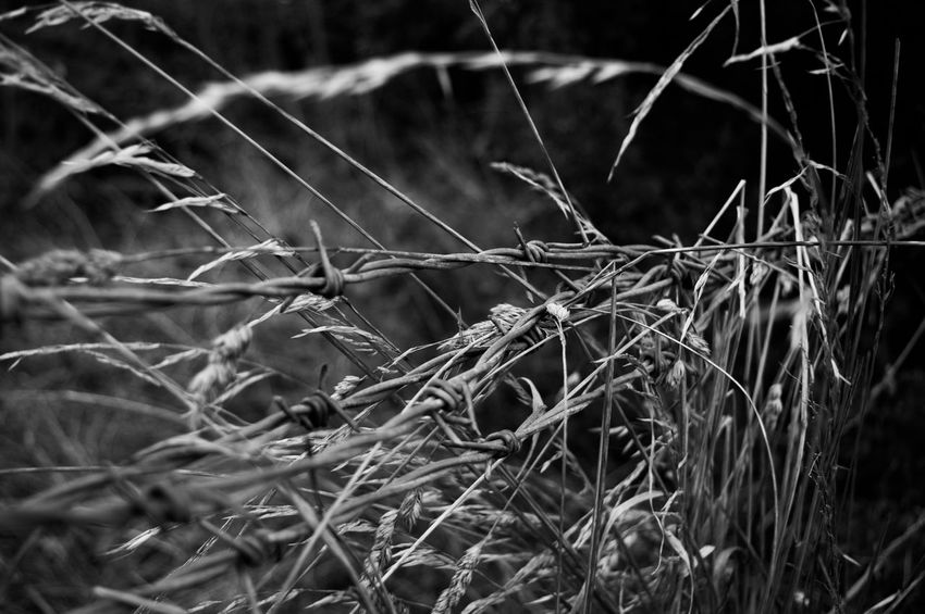 Beauty In Nature Botany Close-up Day Dried Plant Focus On Foreground Full Frame Growing Growth Nature No People Outdoors Plant Selective Focus Tranquility