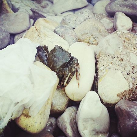 Small crab ☺ 😊 🌊 Crab Sea Sea And Rocks Small Crab Relaxing Taking Photos Hello World Cute Sea Animal Hanging Out