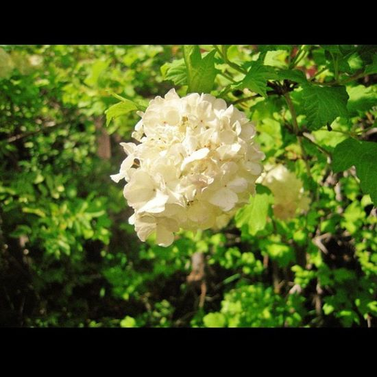 White Flowers Are  So Purty