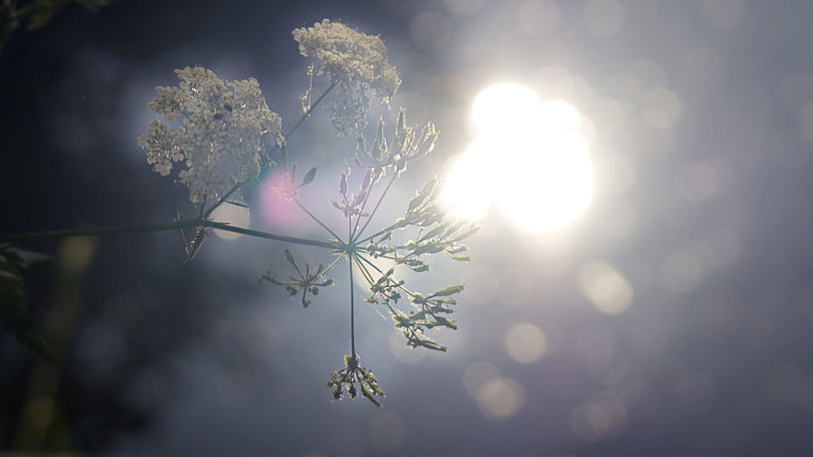Close-up of frozen plant against bright sun