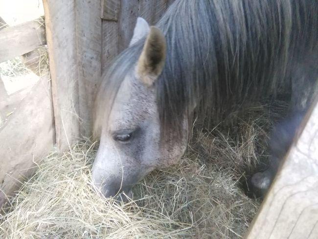 My horse having is dinner Enjoying Life