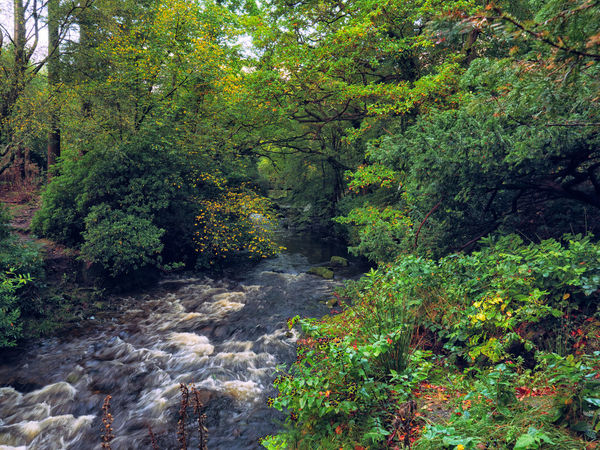 Northern Ireland Tollymore Forest Park Beauty In Nature Day Flora Forest Green Color Growth Nature No People Outdoors Plant River Scenics Tranquility Tree Water Waterfall