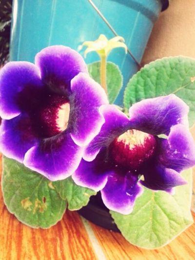 Flower Purple Petal Beauty In Nature Fragility Plant