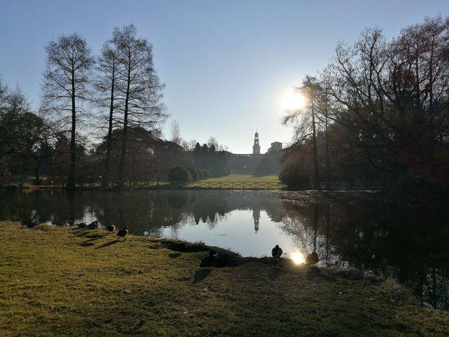 Milano Milan Nature Water Parco Sempione Anatre Ducks Reflection Lake