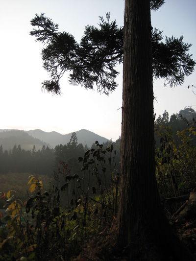 Countryside Iwate Japan Tohoku Tono 岩手 東北 遠野 Trees