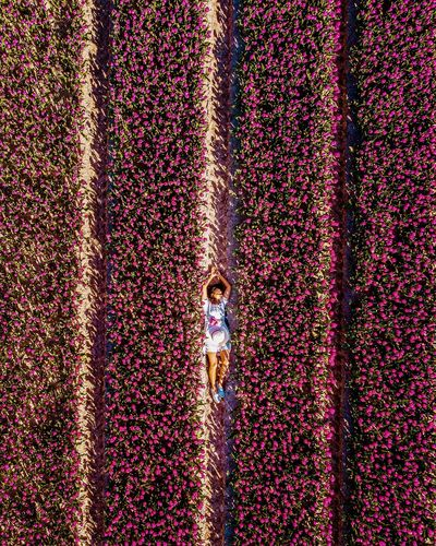 Springtime Spring Red Flowers Netherlands Holland Tulips Tulips🌷 Tulips Flowers Spring Drone  Above Woman Hat Dress Men Pattern Sky Colorful Poppy Blooming
