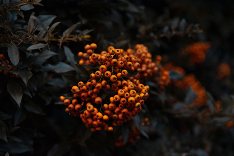 Close-Up Of Orange Flowers On Leaves