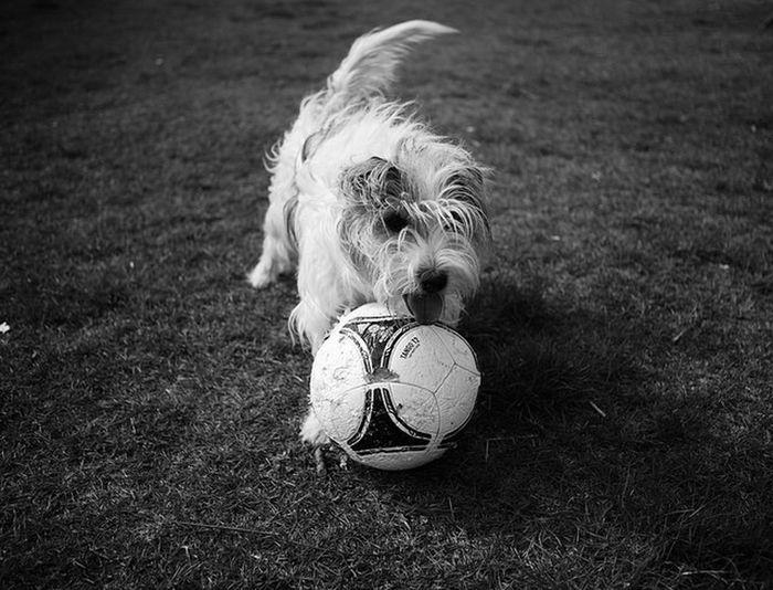 Mine ❤ Dog Need A Haircut Portrait