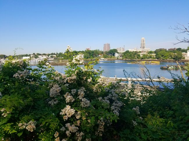A lovely morning at Five Islands Park, New Rochelle (6/5/2018) Flower Tree Water Clear Sky Urban Skyline Cityscape Sky Architecture Building Exterior Skyscraper Park - Man Made Space Downtown Plant Life