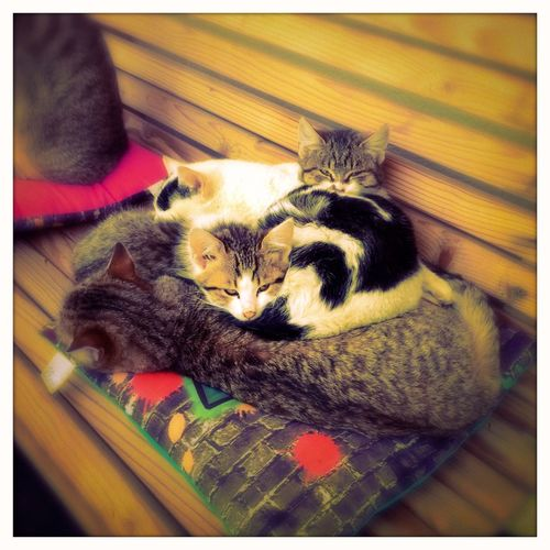 Cats resting