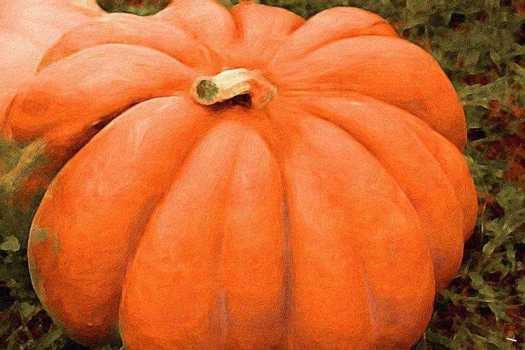 Autumn Harvest Pumpkin Vibrant Color Beauty Of Nature Paint Edit Photo