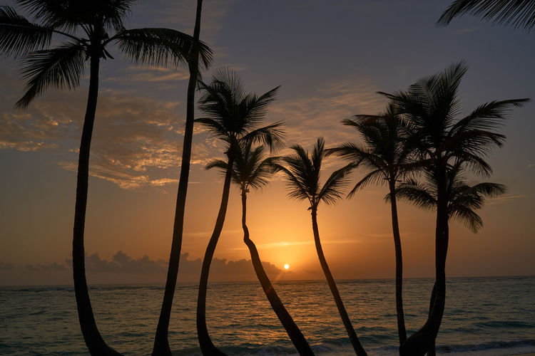 Silhouette palm trees by sea against sky during sunset