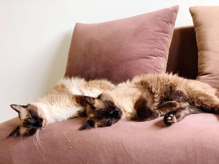 Cats sleeping on sofa at home