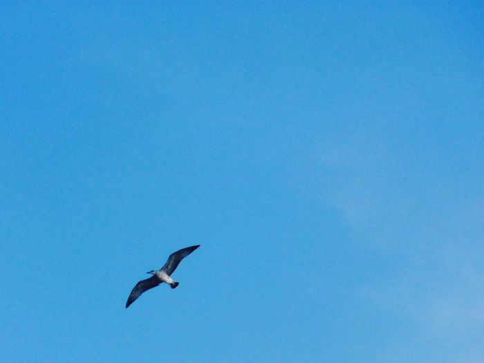 Seagulls Sky Büyükada Prinkipo Prince Islands Turkey