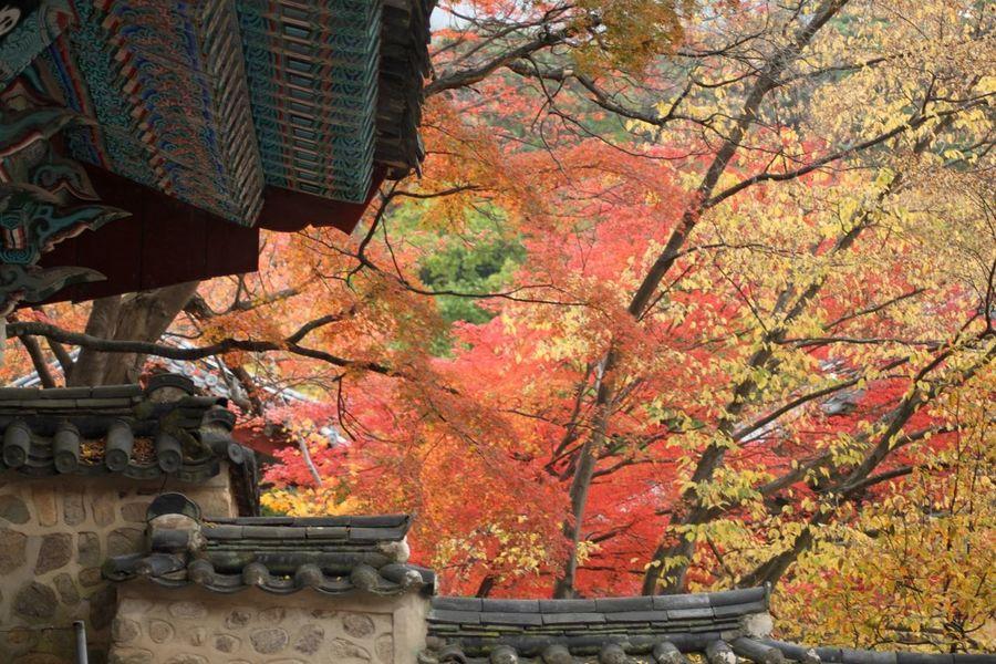 Autumn colours, Bulguksa Temple, South Korea Asian Culture Autumn Colors Autumn Leaves Bulguksa Buddhist Temple Temple South Korea Korea Romantic Architecture