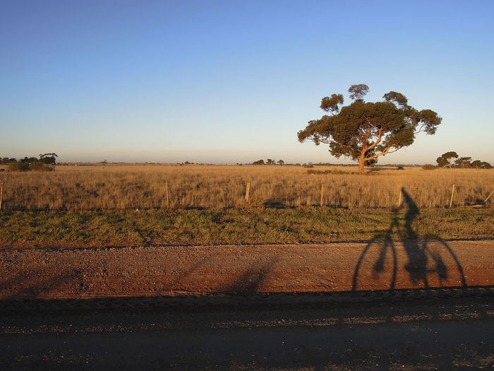 Shadow Riding at sunset time Austrlaia Victoria Beauty In Nature Clear Sky Day Field Full Length Grass Growth Landscape Mammal Nature No People Outdoors Riding Riding Bike Rural Scene Scenics Selfie Shadow Sky Sunset Tree