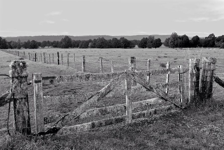 New Zealand Scenery Black And White Farm Fence Sheep Farm
