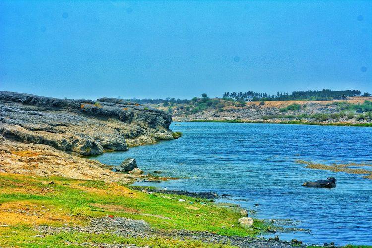 River Bank View Buffelo Animal In Water Water River Riverside Bank Of River Riverbank Water Sea Blue Sky