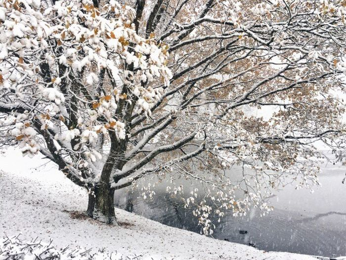 Snow on tree branch during winter