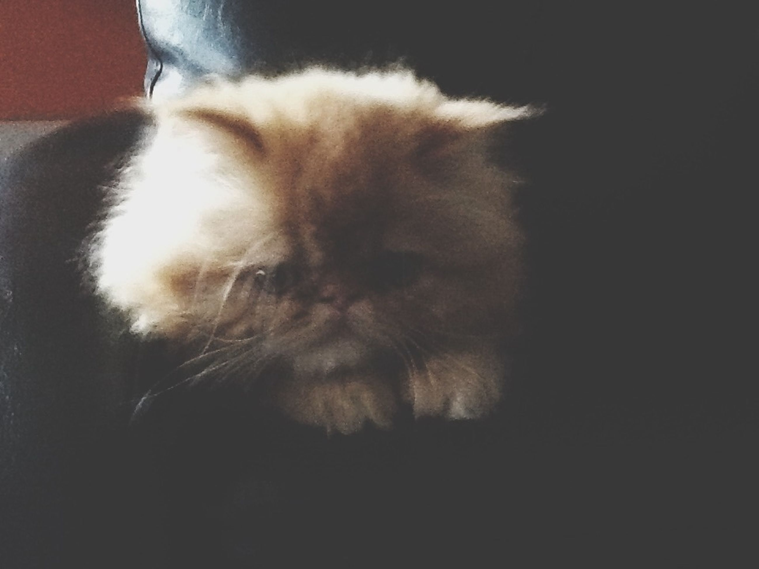 pets, domestic animals, one animal, domestic cat, animal themes, indoors, cat, mammal, feline, whisker, relaxation, close-up, home interior, resting, lying down, sleeping, animal head, home, no people, looking away