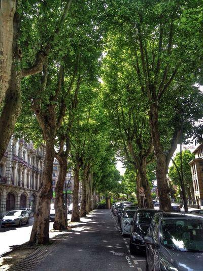 Metz Walking France Nature
