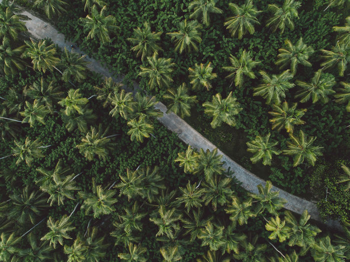 Aerial view of road amidst palm trees