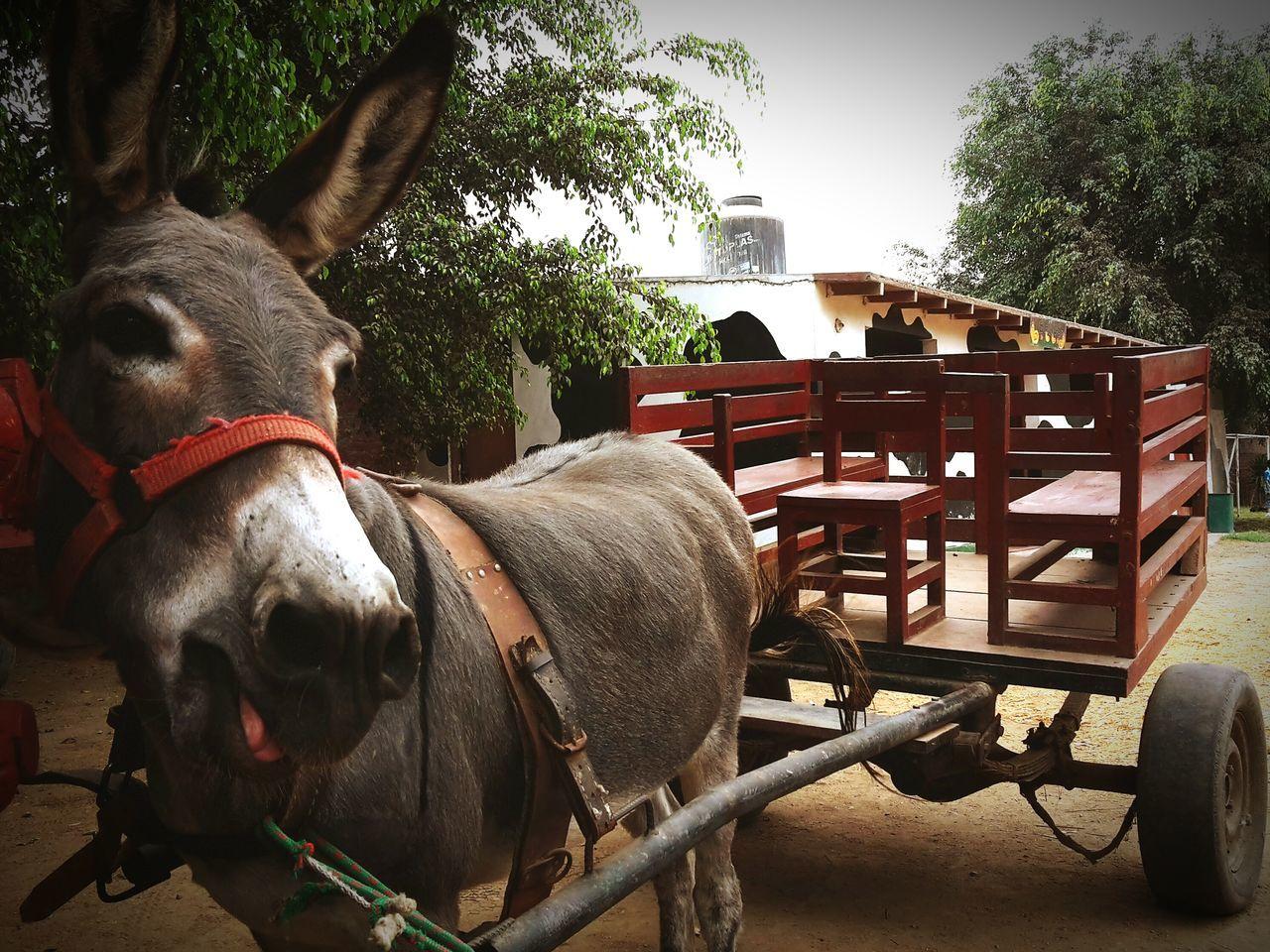 Close-up of donkey cart on street