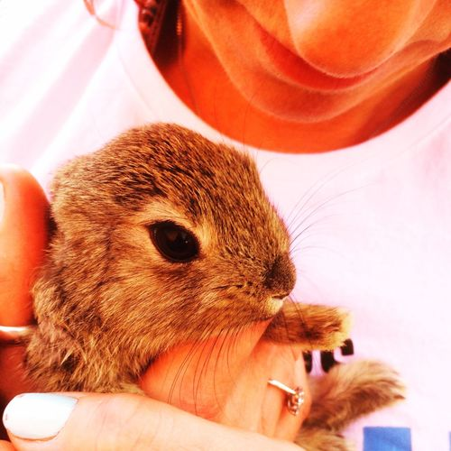 Close-up of hand holding a baby rabbit