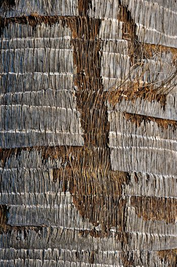 Nature Abstract Nature Texture Nature Art Abstract Tree Texture Texture And Pattern