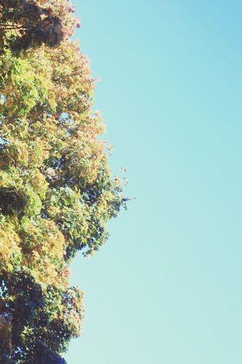 Autumn sunshine. Autumn Autumn Leaves Autumn Colors Sunshine
